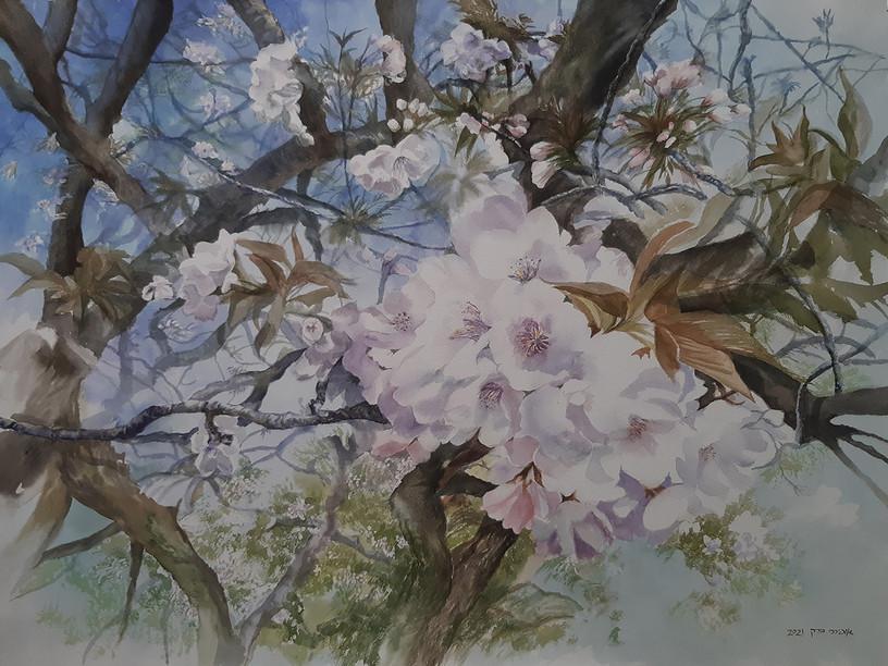 Cherry blossam-Watercolor-74X54cm-2021