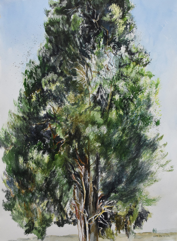 Old cypress tree-Watercolor-54X74cm-2