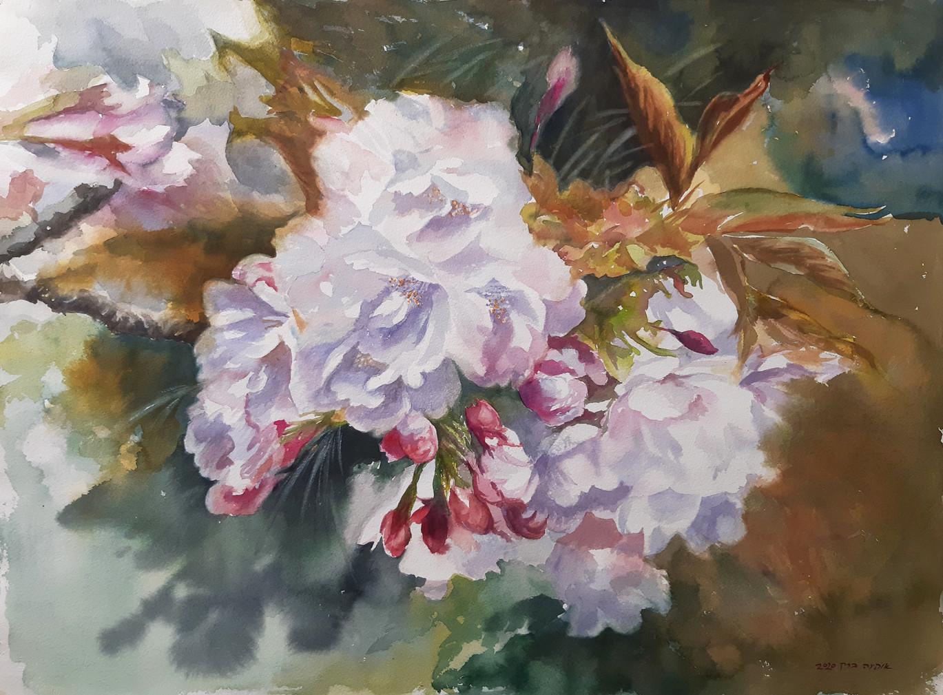 Cherry blossom-Watercolor-76X56cm-2020