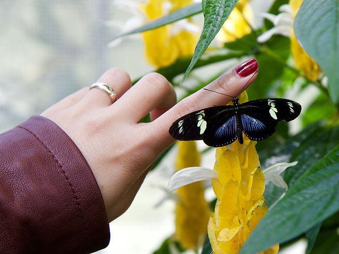 woman-butterfly.jpg