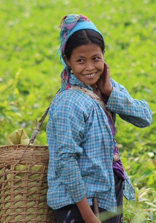Tea picker near Hsipaw