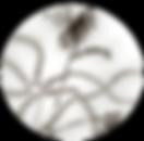 """лого, творческо обединение """"Филизи 33"""" Лиза Боева, Ицко Финци, Анна Стефанова"""