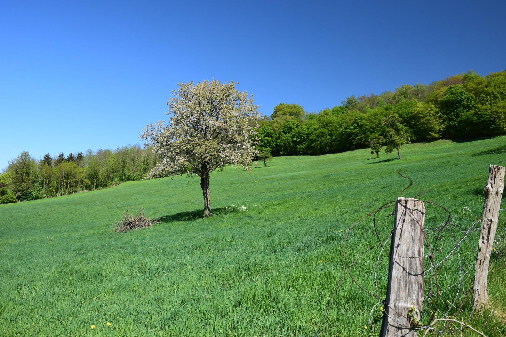 Mille Fleurs - Surrounding area