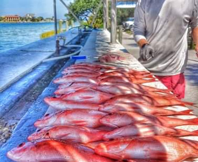 Pensacola Beach Fishing Report 08/30/19