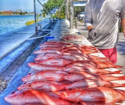 Pensacola Beach Fishing Report 08/30/19