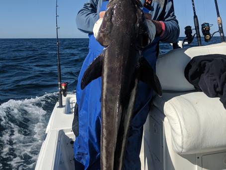 Pensacola Fishing Report 05-12-19