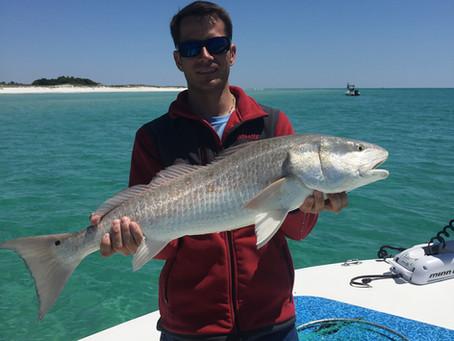 perdido key fishing update 12-11-18