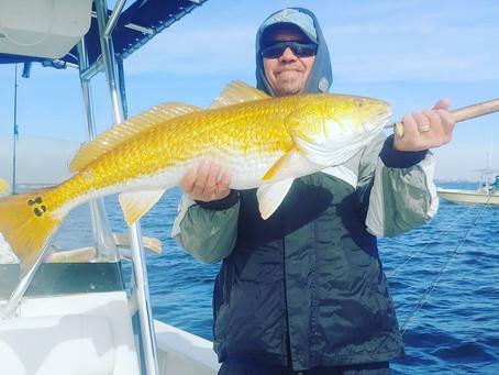Fishing Report For Navarre Beach 11/22/18-11/27/18