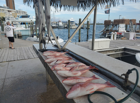 Pensacola Beach Fishing Report 06/29/2020