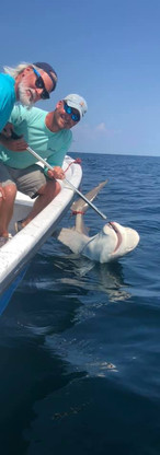Pensacola Shark Fishing Charters
