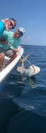 Pensacola Shark Fishing Charters