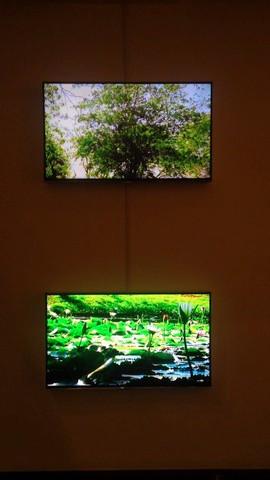 video vision oblicua.jpg