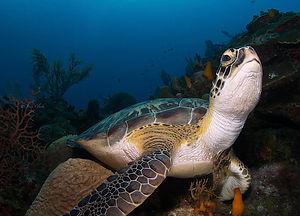 turtle+final+(1+of+1).jpg