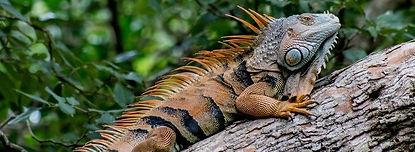 iguana park.jpg