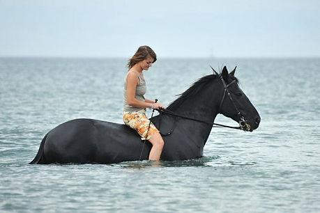 horseback ridding.jpg