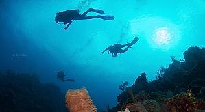 divers+1+(1+of+1).jpg