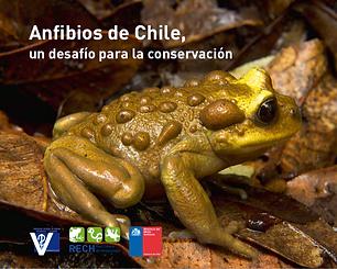 Anfibios de Chile, un desafío para su conservación