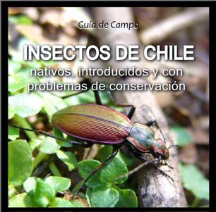 Guia de Campo - Insectos de Chile
