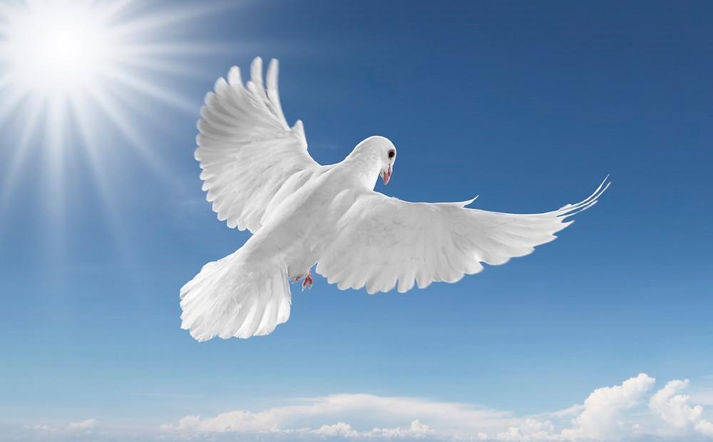 Creating Memories Funerals & Memorial Tributes