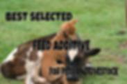 diatomaceous earth Kitchener Ontario Canada Utopian pets feed additive
