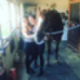 bri-D Horse.jpg