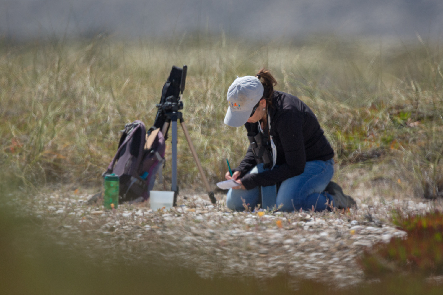 Credits._Darío_Podestá_(Glenda_D._Hevia_collecting_data_from_Two-Banded_Plover_nests_during_fieldwor