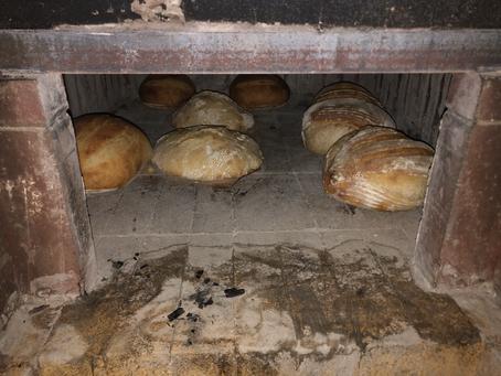 Bread Update First Week of October