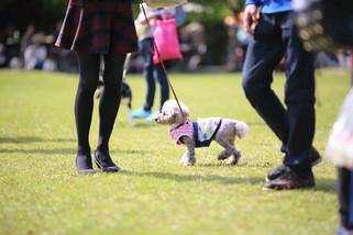 犬 (11).jpg
