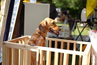 犬 (4).jpg
