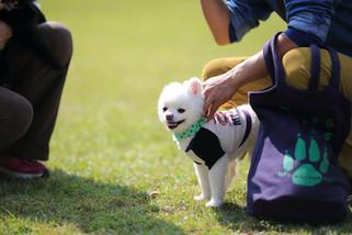 犬 (5).jpg