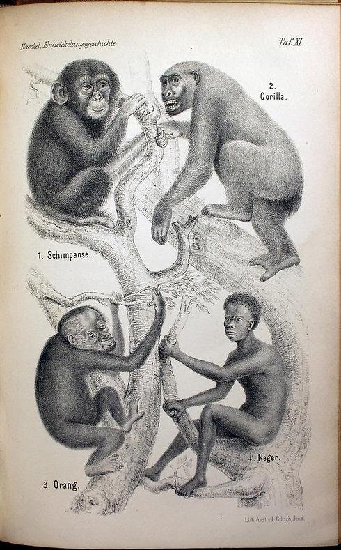 negro monkey encyclopeadia.jpg