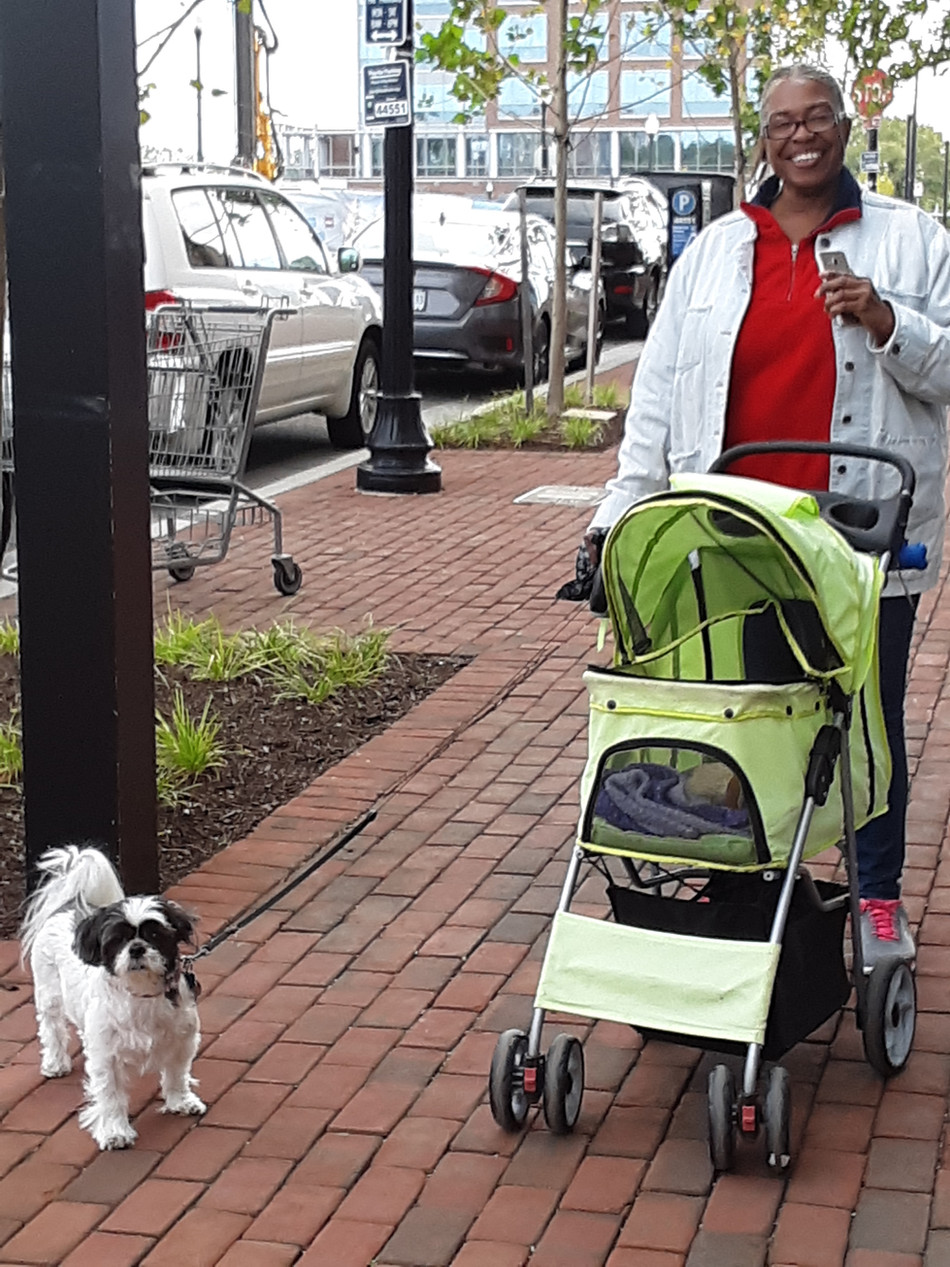 ACUMEN FURRY FAMILY - Walking Becomes Strolling