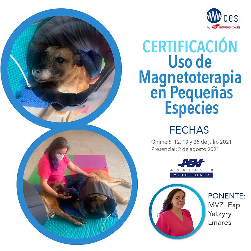 Certificación Uso de Magnetoterapia en Pequeñas Especies