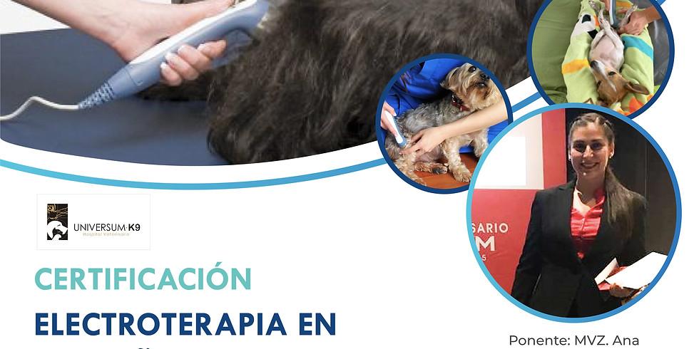 Certificación Electroterapia en Pequeñas Especies