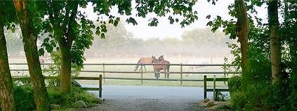 Pferdegruppe-Morgengrauen-01-190130.jpg