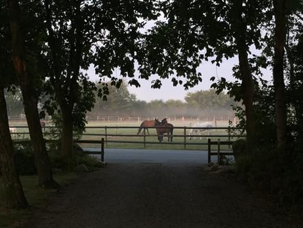 201209-Blick-durch-Allee-auf-Pferdekoppe