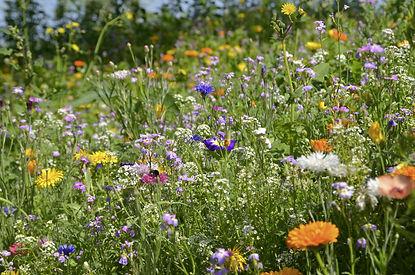 Blumenfeld-blühende-Blumen-PIXA-flower-m
