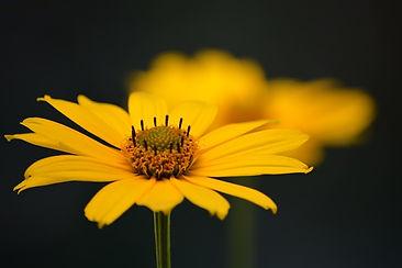 flor crecer.jpg