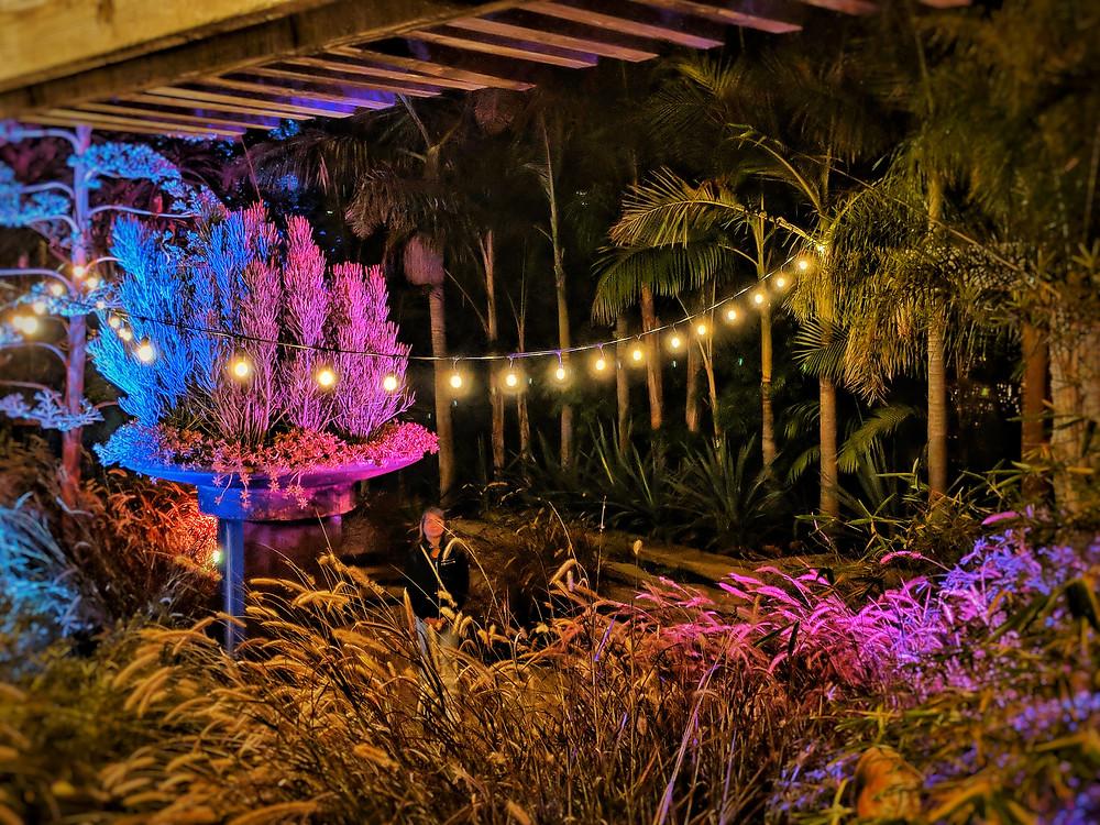 Event party lighting, string lights, uplights