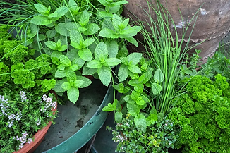 Plantes.webp