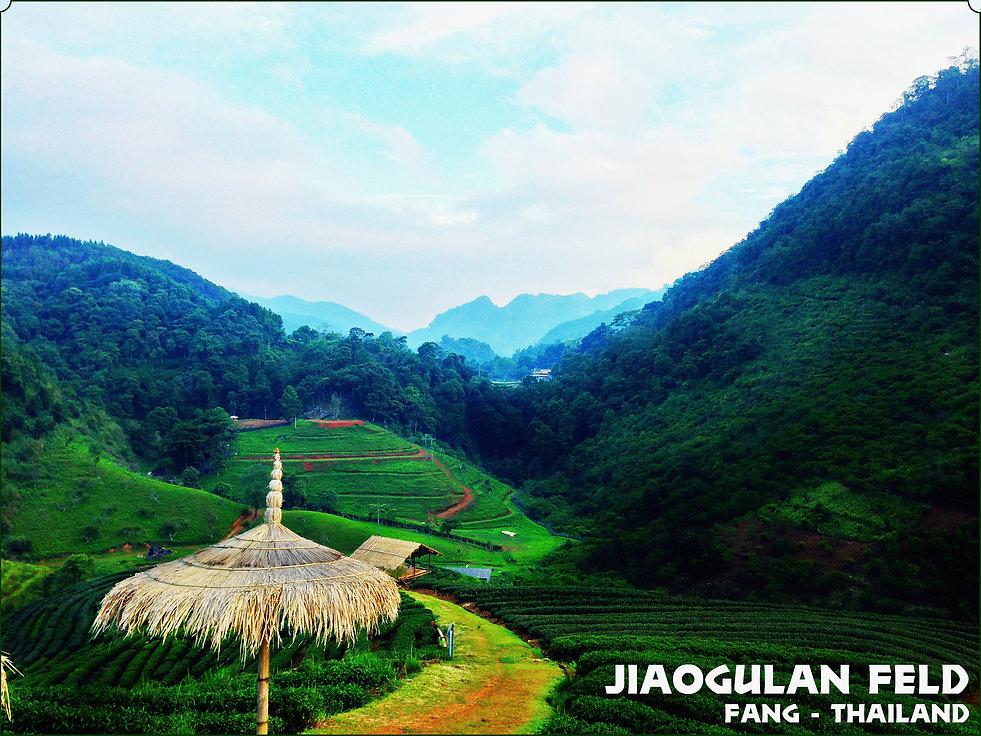 Jiaogulan Tee - Bestel & Kauf Online, Webshop Bioherby, Deutschlands online Bio- Jiaogulan und Tee Versandshop.