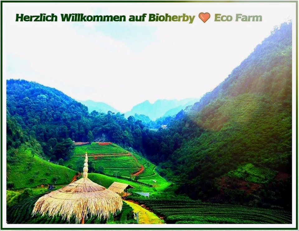 Jiaogulan Tee | Bioherby Bio-Jiaogulan Farm Online Kaufen - Deutschland