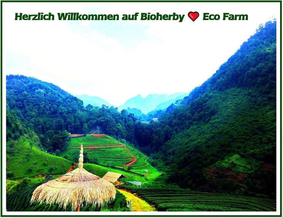 Unsere exklusiven Naturprodukte aus Eco-Farm in Bergtälern ∞ Unter Lizenz des Agrarministerium: Bio, Öko,FDA-zertifizierte Jiaogulan Tee, Reishi Pilz, Ginseng Wurzel und mehr online kaufen und bestellen in Deutschland. 100% Qualität aus Eco-Farm von BIOHERBYⓟ
