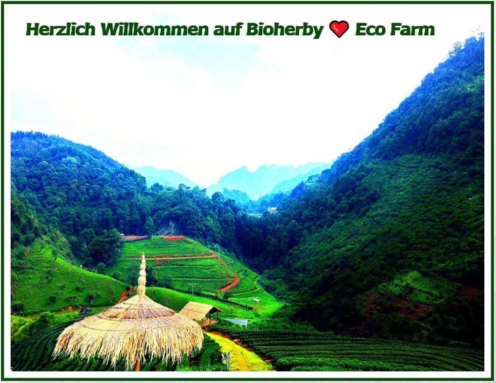 Jiaogulan Tee - Bio aus Bergtälern kaufen - BIOHERBY