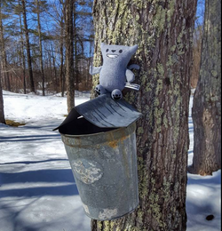 Syrup time!