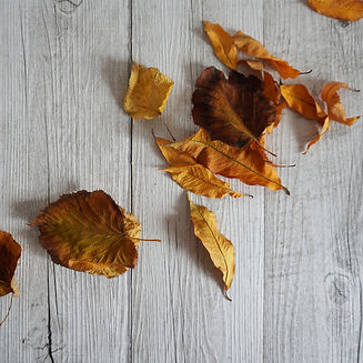 autunno 1.jpg