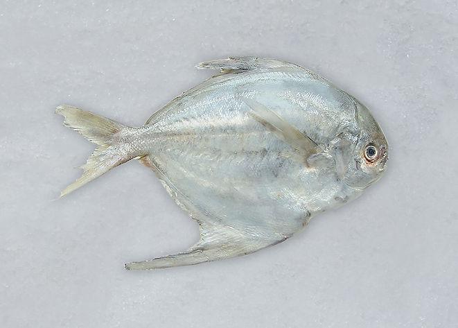 PCC.fishes-03.jpg