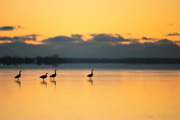AdrienFavre_oiseaux-coucher-soleil_Amérique-du-nord
