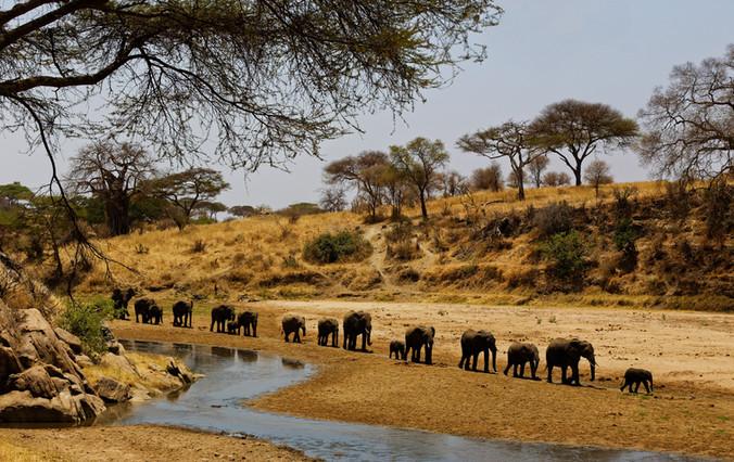 AdrienFavre_éléphants_Afrique