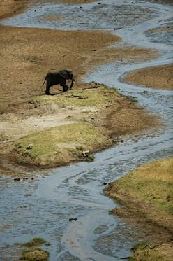 AdrienFavre_elephant_Afrique